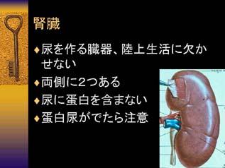 タンパク 尿 検査